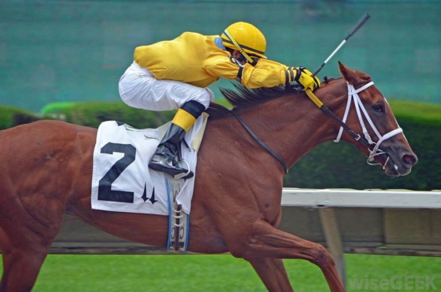 Know The Best Horse Breeds Good For Horse Racing